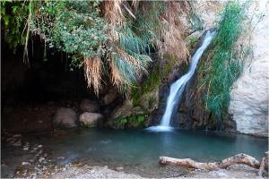 Заповедник Эйн Геди в Израиле